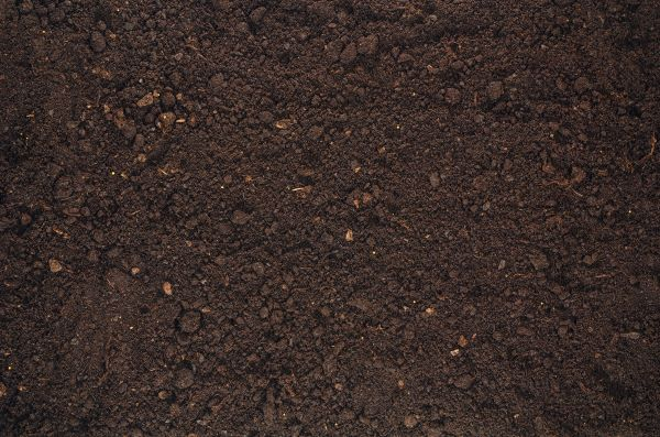 Image of Black Dirt